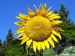 yellow-17712_150.jpg